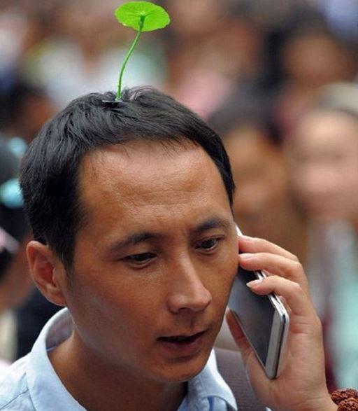 chineses-planta-plástico-7