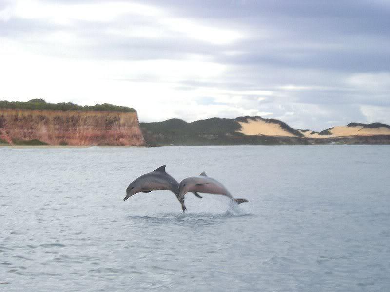 Baía dos Golfinhos – Rio Grande do Norte
